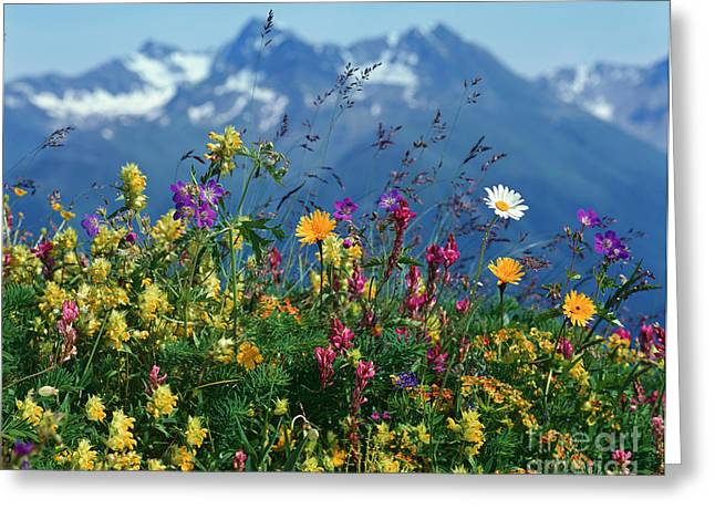 Alpine Wildflowers Greeting Card by Hermann Eisenbeiss and Photo Researchers