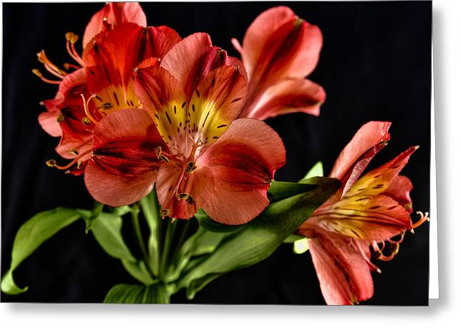 Alstroemeria De Peru Greeting Card by Michael Putnam