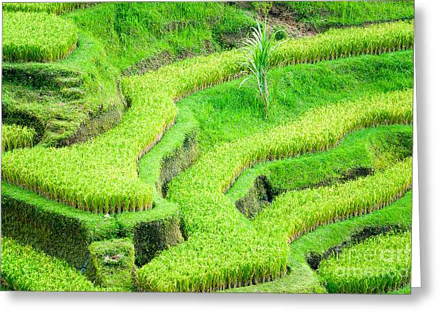 Greeting Card featuring the photograph Amazing Rice Terrace Field by Luciano Mortula