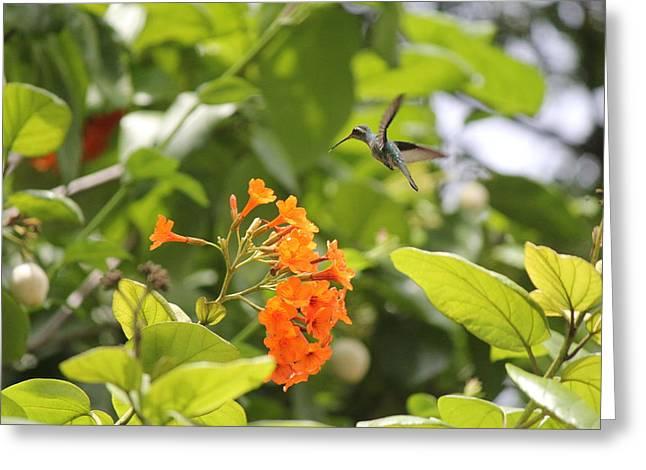 Amber Nectar Greeting Card by David Grant