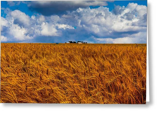 Amber Waves Of Grain Greeting Card by Doug Long