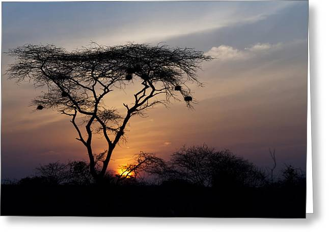 Amboseli Sunrise Greeting Card