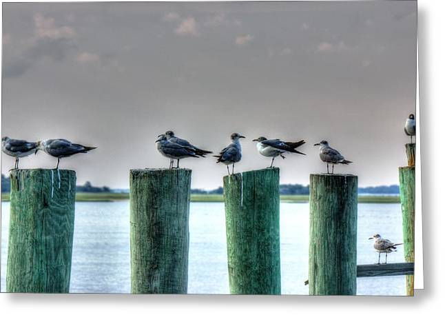 Amelia Island Locals Greeting Card by Barry Jones