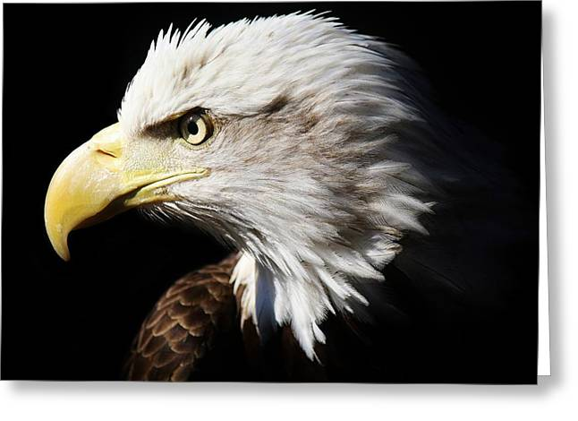 American Bald Eagle Greeting Card by Paulette Thomas
