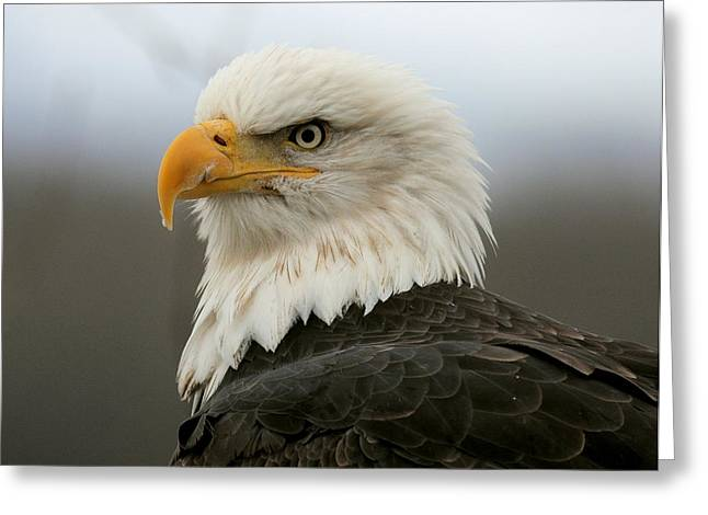 Greeting Card featuring the photograph American Bald Eagle Portrait by Myrna Bradshaw