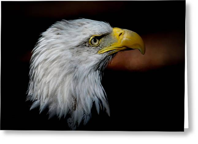 American Bald Eagle Greeting Card by Steve McKinzie