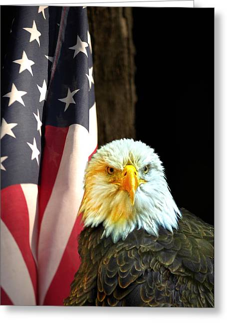 Greeting Card featuring the photograph American Eagle And American Flag by Randall Branham