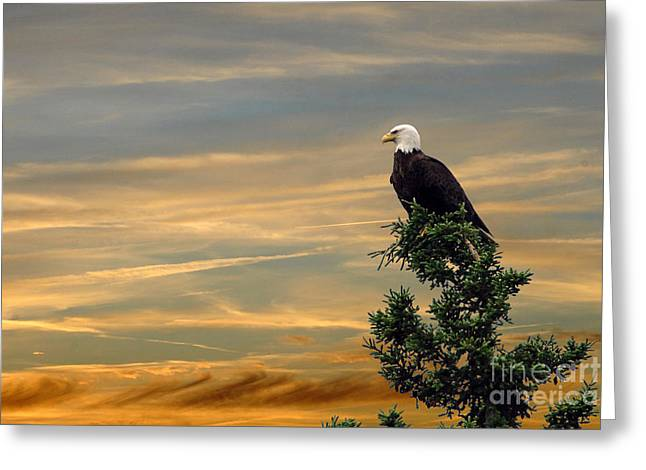 Greeting Card featuring the photograph American Eagle Sunset by Dan Friend