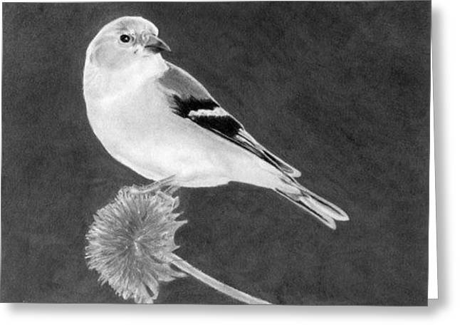 Greeting Card featuring the drawing American Goldfinch by Ana Tirolese