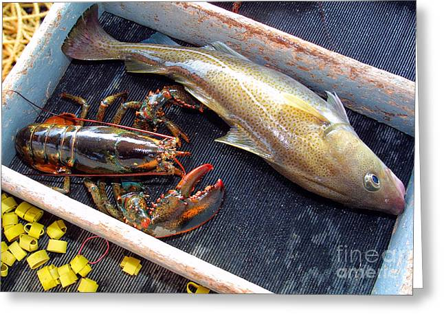 American Lobster And Cod Caught Off Chatham On Cape Cod Greeting Card