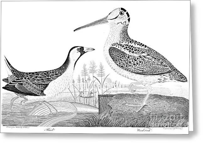 American Ornithology Greeting Card