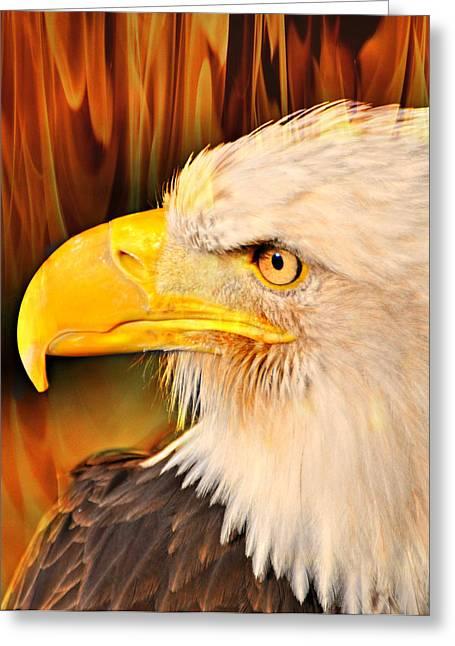 Americasn Bald Eagle Greeting Card by Marty Koch