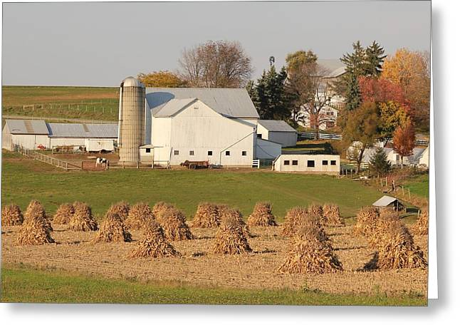 Amish Countryside Greeting Card