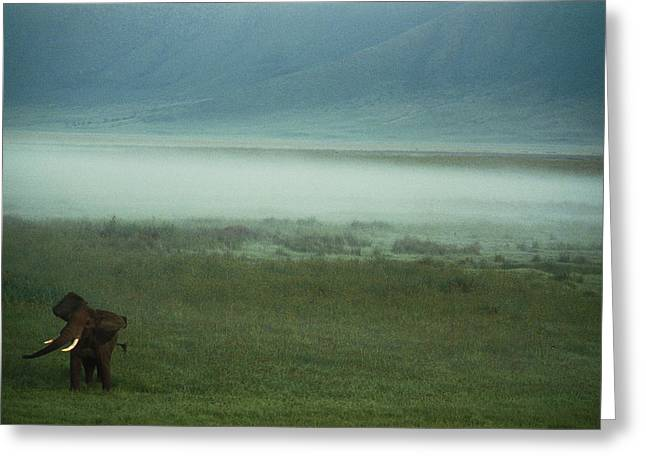 An African Elephant In The Ngorongoro Greeting Card by Chris Johns