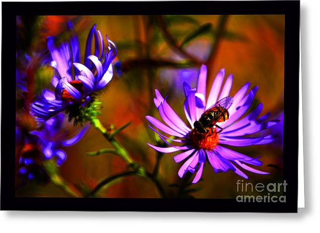 An Afternoon Bee In The Asters Greeting Card by Susanne Still