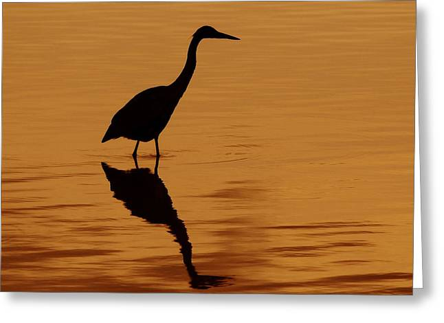 An Early Morning Dip Greeting Card by Tony Beck