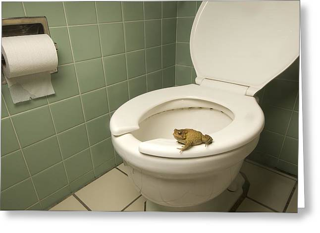 An Eastern American Toad In A Motel Greeting Card by Joel Sartore