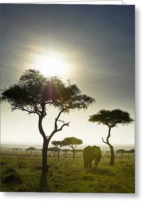 An Elephant Walks Among The Trees Kenya Greeting Card by David DuChemin
