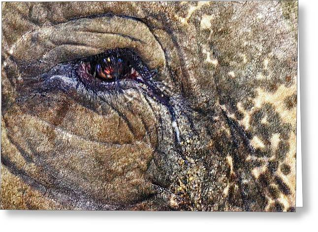 Greeting Card featuring the photograph An Elephants Tear by Kelly Reber