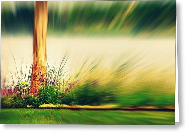 An Explosion Of Beauty Greeting Card by Shalini George