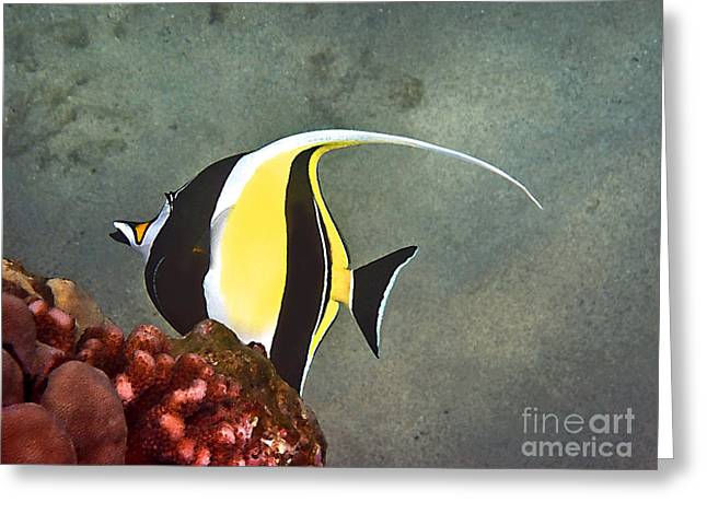 Greeting Card featuring the photograph An Idol-ized Reef Fish by Bette Phelan