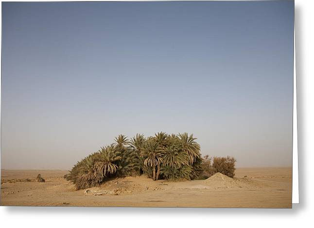 An Oasis Grows Lushly In The Desert Greeting Card by Taylor S. Kennedy