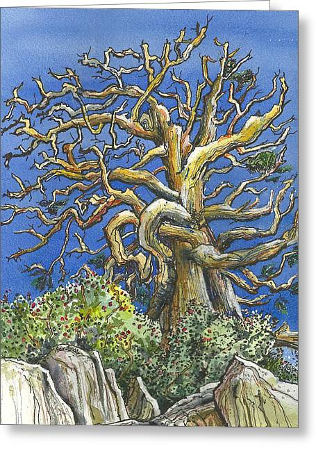 Greeting Card featuring the painting An Old Bristol Pine by Terry Banderas