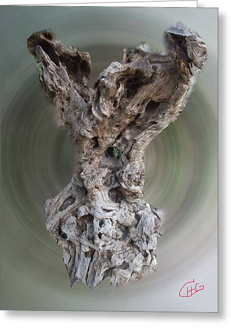 Ancient Old Olive Tree Greeting Card by Colette V Hera  Guggenheim