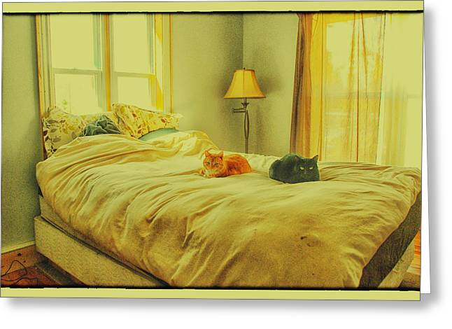 Andi's Cats Greeting Card by Kimberleigh Ladd