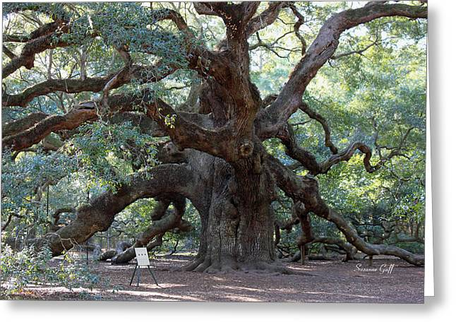 Angel Oak - Dont Climb Or Carve On The Tree Greeting Card