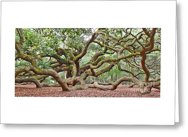 Greeting Card featuring the photograph Angel Oak by Val Miller