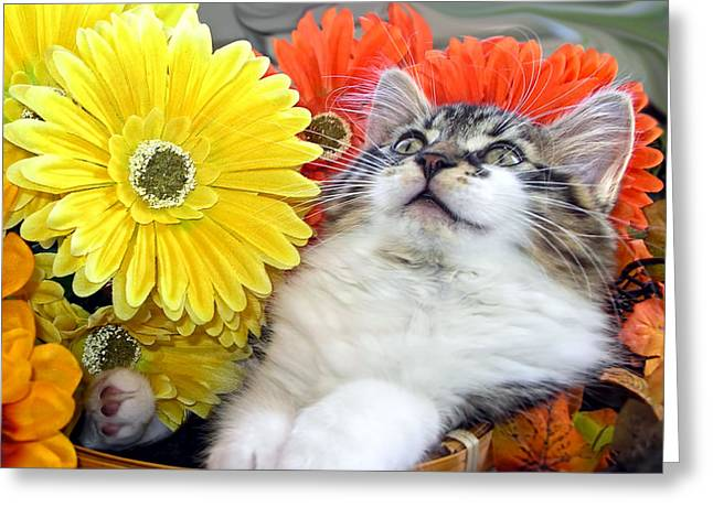 Angelic Kitten With Head Upwards - Curious Kitty Cat In Gerbera Flower Basket - Thanksgiving Season Greeting Card by Chantal PhotoPix