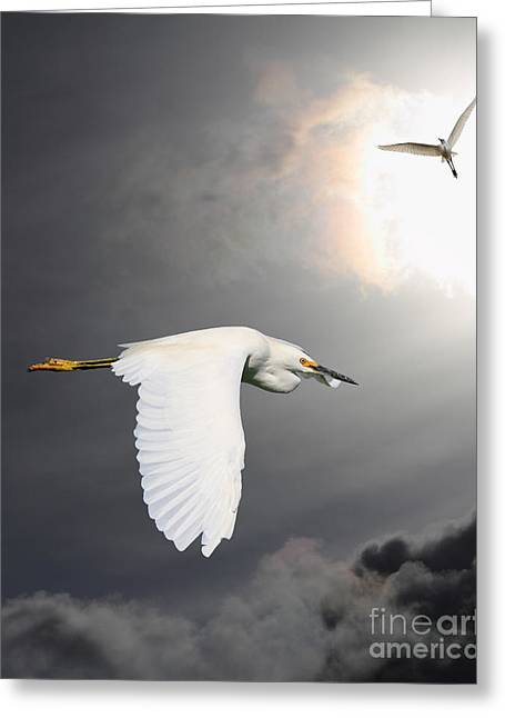 Angels Of The Night Sky Greeting Card by Wingsdomain Art and Photography