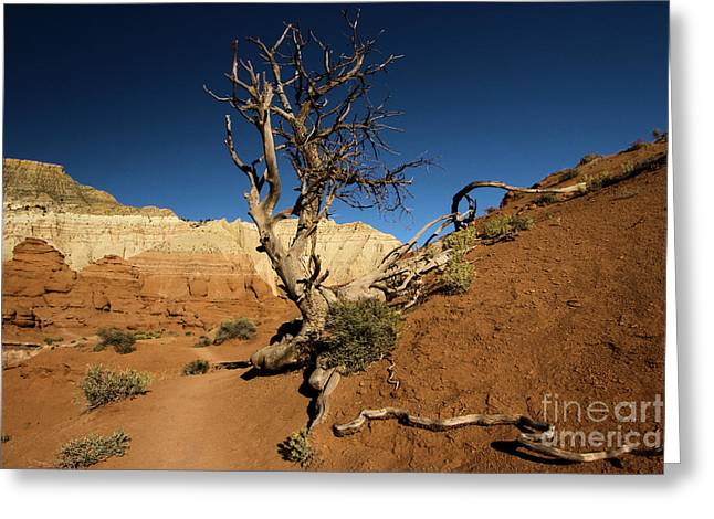 Angels Palace At Kodachrome Basin State Park Greeting Card by Adam Jewell