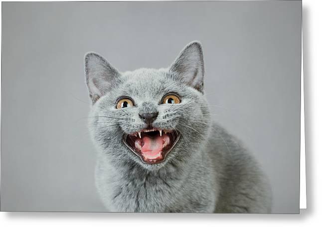 Angry Kitten Greeting Card by Waldek Dabrowski