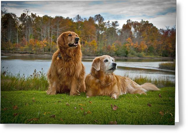 Angus And Lucky Greeting Card