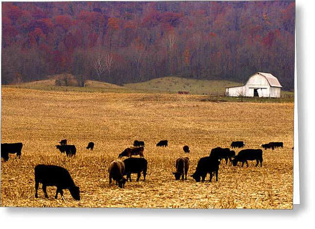 Greeting Card featuring the photograph Angus And Oaks  Farm by Randall Branham