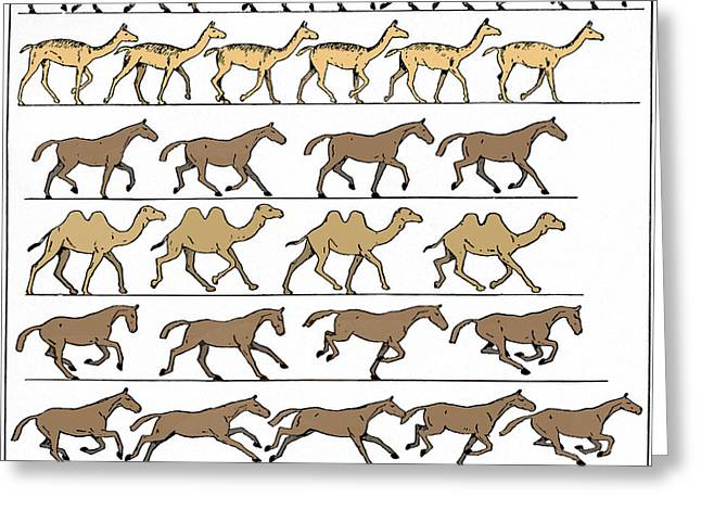 Animal Motion Diagram Greeting Card by Sheila Terry