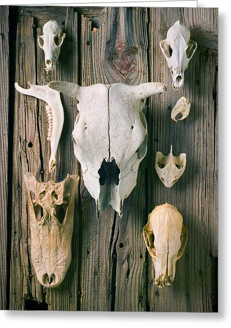 Animal Skulls Greeting Card