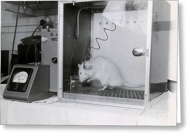 Animal Testing Greeting Card by Omikron