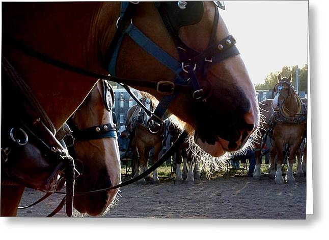 Animals Draft Horse Pull Greeting Card
