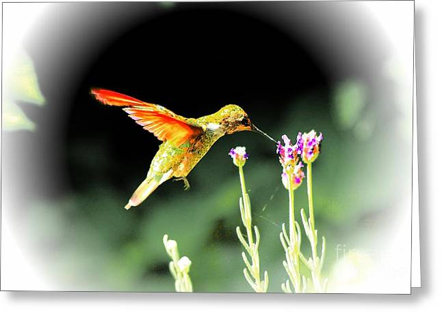 Anna Humming Bird  Greeting Card by Paul Baker