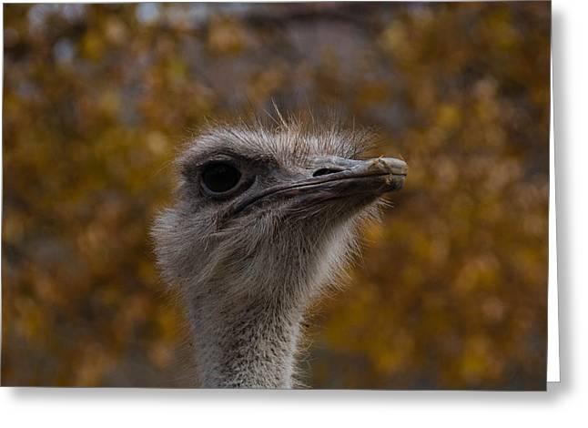 Annoyed Bird Greeting Card by Trish Tritz
