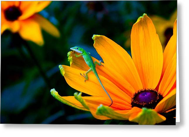 Anole On Yellow Flower Greeting Card by Katherine Altman
