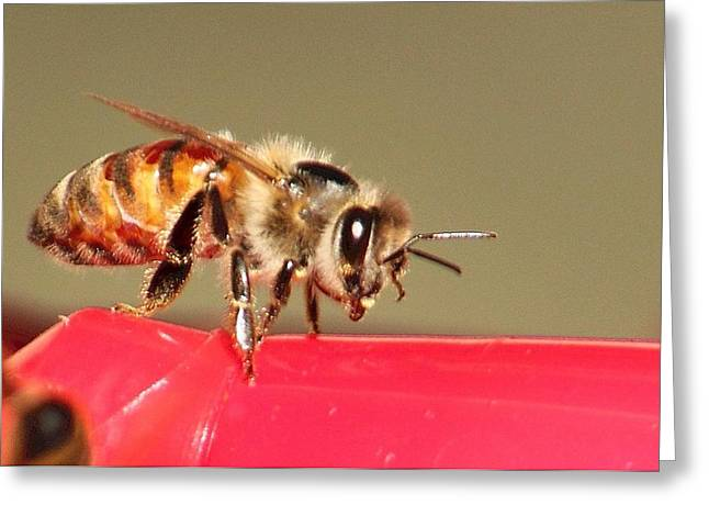 Another Bee Greeting Card