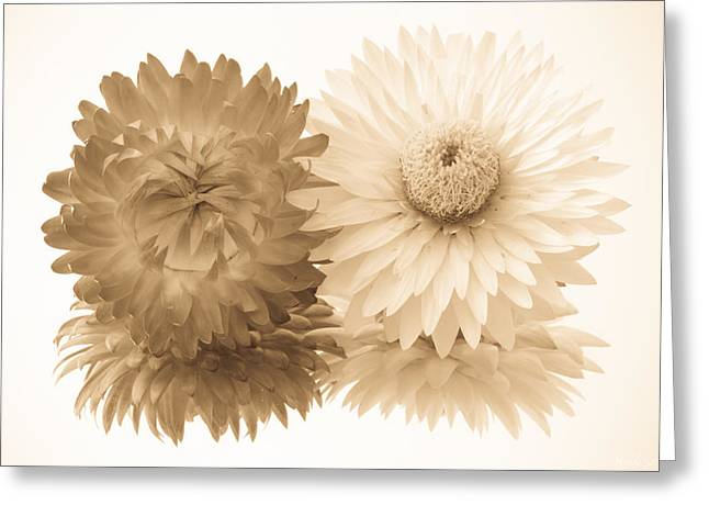 Antique Floral Duo Greeting Card by Heidi Smith