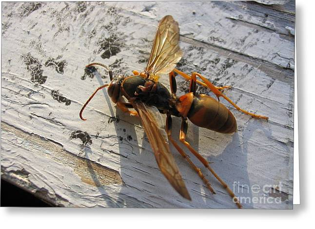 Apache Red Wasp Greeting Card