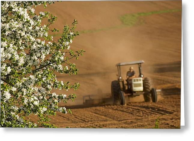 Apple Blossoms And Farmer On Tractor Greeting Card by John Sylvester