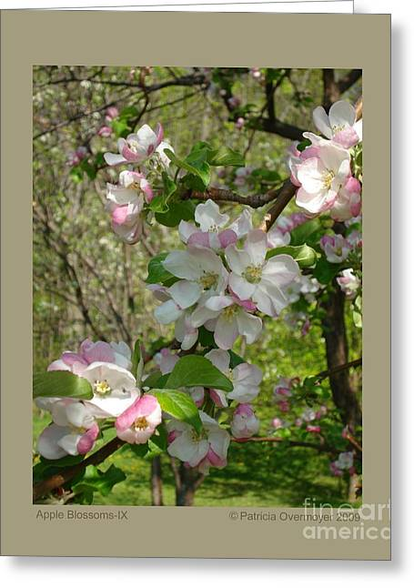 Apple Blossoms-ix Greeting Card by Patricia Overmoyer
