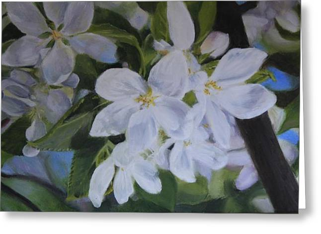 Apple Blossoms Greeting Card by Tammy  Taylor